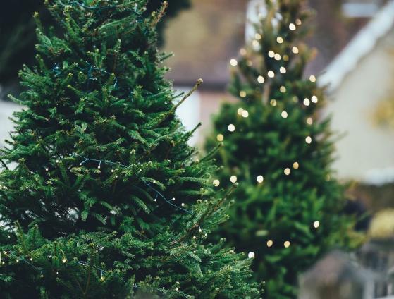 winterfest & holiday tree lighting